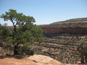 Canyon Rim Trail in Colorado National Monument